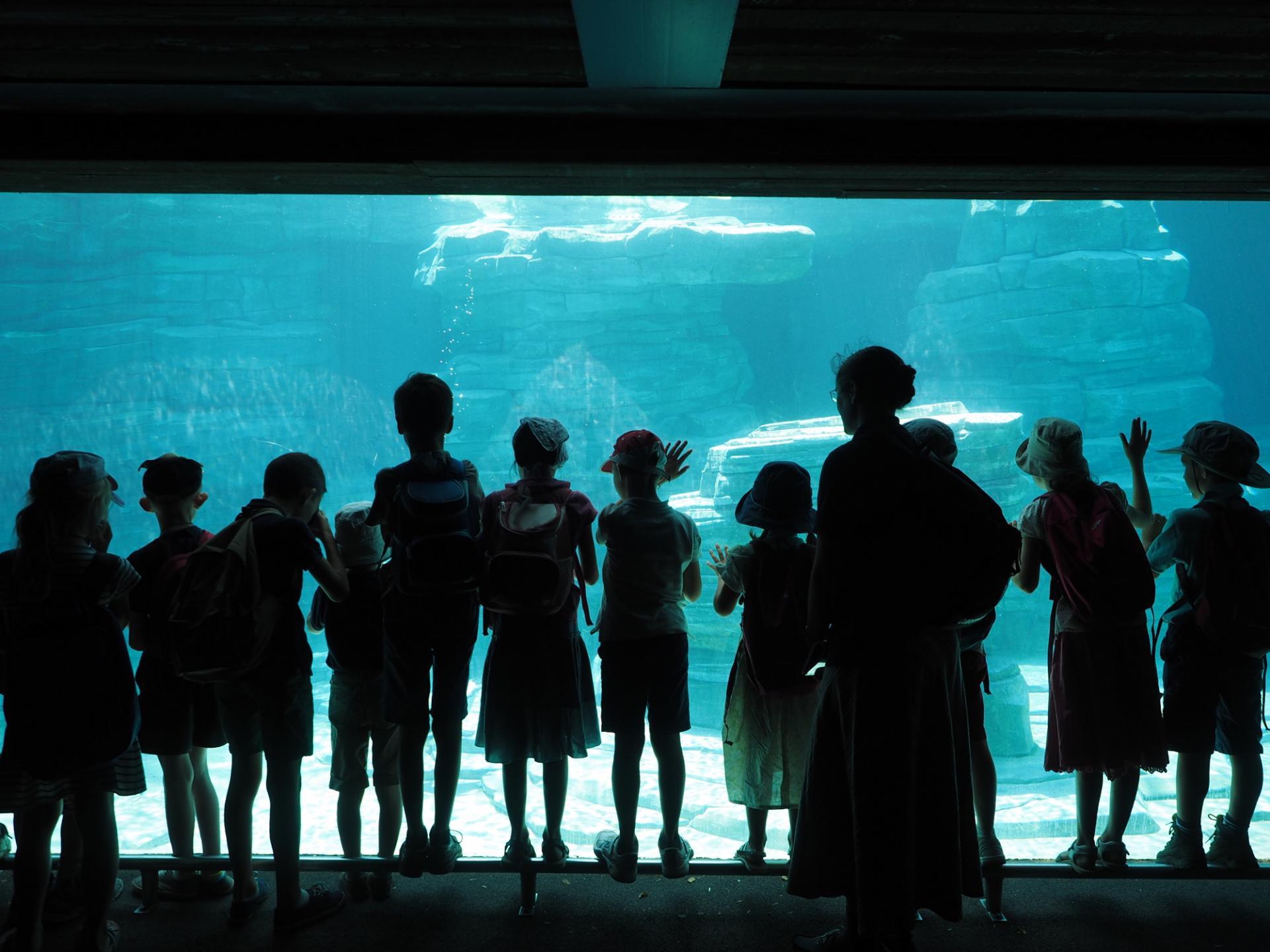 Zoo d'Amnéville- Bassin
